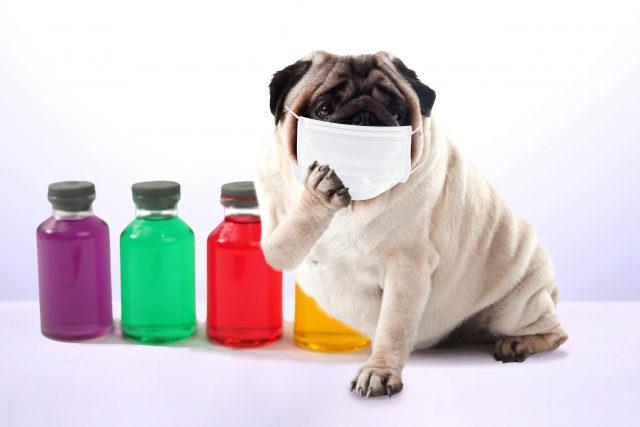 インフルエンザの基本