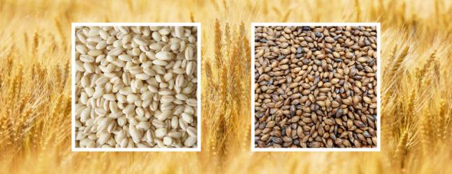 大麦の炊き方