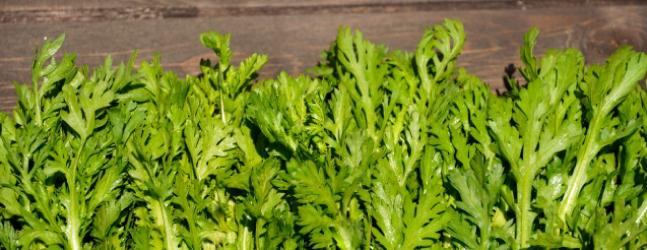 春菊の選び方と保存方法