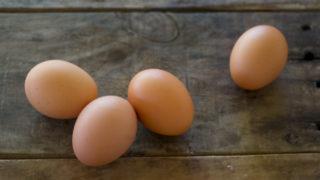 卵の栄養について
